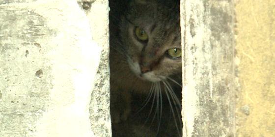 Befalazták a cicákat a Jerikó utcán